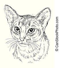 monochromia, abisyński kot