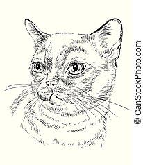 monochromia, birmańczyk, kot