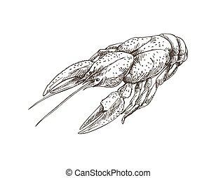 monocromático, esboço, vetorial, ilustração, lagostim