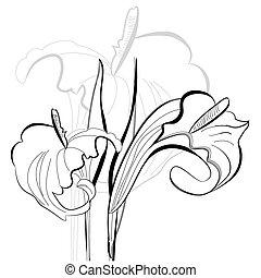 monokrom, liljor, blomningen, calla, illustration