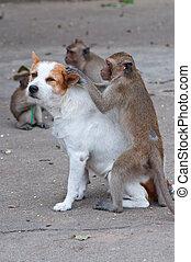 monos, verificar, para, pulgas, y, garrapata