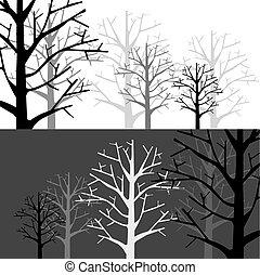 monotone, floresta, dois