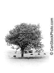 monotree - tree in monochrome