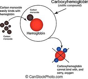 monoxide., protoxyde, hémoglobine, oxygen., illustration,...