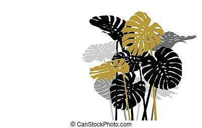 Monstera deliciosa or swiss cheese plant tropical leaves on...