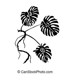 feuilles philodendron vecteur feuilles fond blanc vecteur eps rechercher des clip art. Black Bedroom Furniture Sets. Home Design Ideas