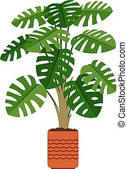 Monstera houseplant in ceramic pot, vector icon on white background