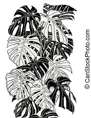Monstera leaf sketch by hand drawing