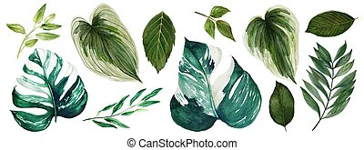 Monstera leaves, Watercolor bright greenery collection, hand drawn