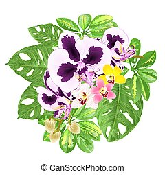 monstera, orchidee, tropische blumen, cymbidium, ...