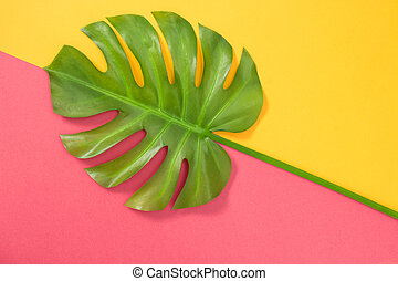 Monstera palm leaf on pink and yellow background