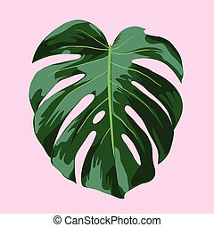 Monstera Tropical Leaf Illustration