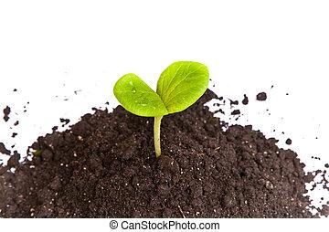 montão, sujeira, com, um, planta verde, broto, isolado