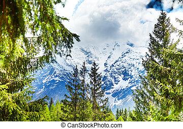 Mont Blanc, Alps view through fir-trees