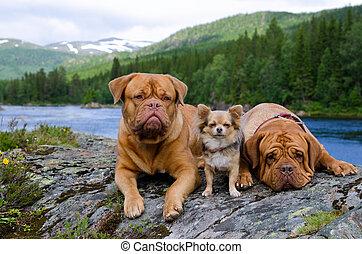montaña, banco, tres, río, noruega, perros