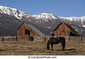 montaña, caballo, natural, ganado, rancho, madera, granero, pasto, invierno