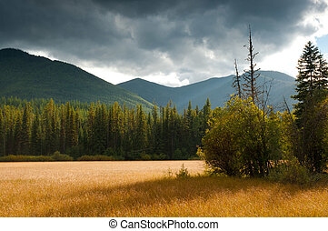 montaña, debajo, pradera, arándano