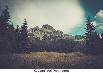 montaña, entre, hermoso, bosque, en, tatras