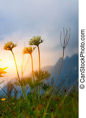 montaña, flores, en, ocaso