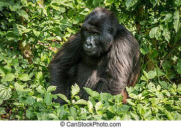 discreto africano sentado en la cara