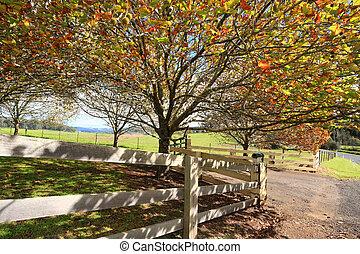 montaña, landsc, mono, en, el, otoño, otoño