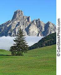 montaña, paisaje árbol