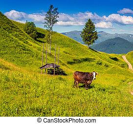 Montaña, pasto, ganado