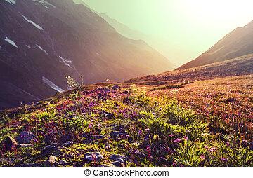 montaña, pradera