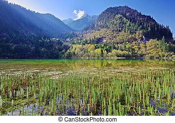 montaña, sichuan, lago, mañana, jiuzhaigou, china, valle
