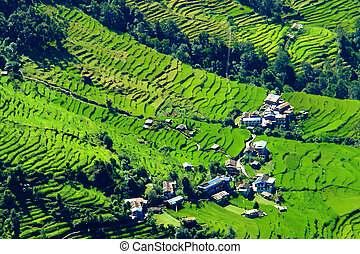 montaña, viaje dificultoso, campo, campos, nepal, annapurna, paisaje, verde, base, arroz, río