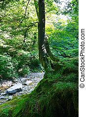 Montaña, viejo, corriente, árbol, soleado,  relict, bosque, roca, día