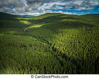 montañas, aéreo, bosques coníferos, cubierto, vista