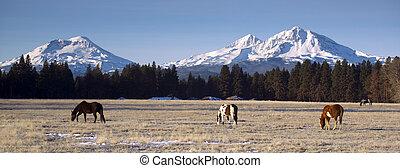 montañas, animales, rancho, tres, oregón, base, hermanas