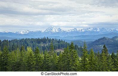 montañas, con, nieve, y, pinos, en, estado de washington