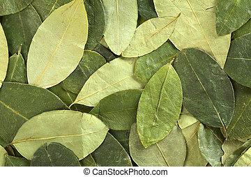 montañas, (lat., traditionally, ayuda, borracho, erythroxylum, té, altitud, enfermedad, ellos, coca, contra, fondo., secado, perú, coca), masticado, hojas