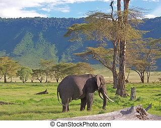 montañas, ngorongoro, tanzania, elefante, sabana, tropical, ...