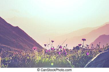 montañas, pradera
