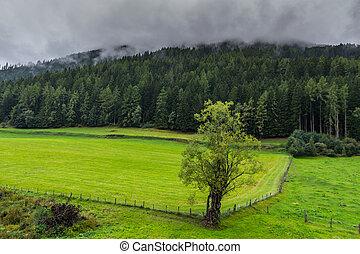 montañas, rainclouds, árbol, denso, campo, verde, cerca