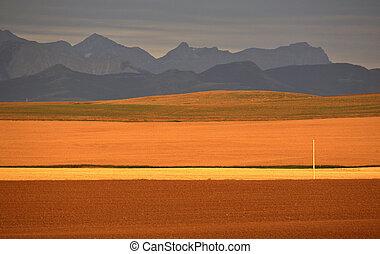 montañas, rocoso, distancia, llanuras altas, alberta