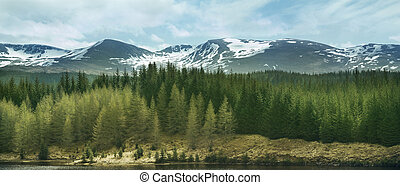 montañas, tierras altas, bosques