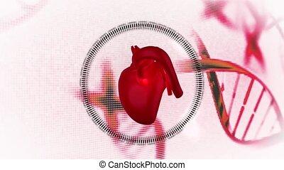montage, coeur, médecins, diagr