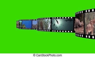 montage, filmmeter, tierwelt