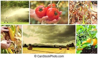 montage, land leven, landbouw