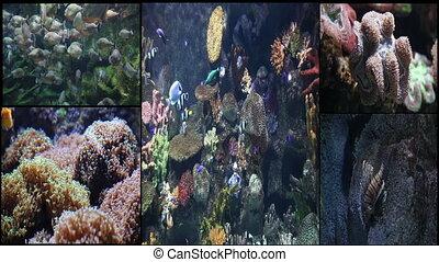 montage marine life