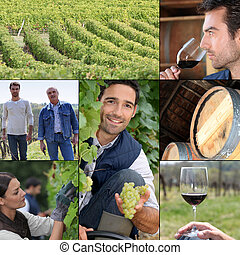 Montage of life on a vineyard