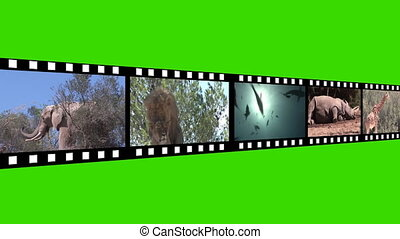 Collage of Wildlife motion Footage