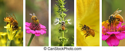 montage, panoramique, nature, fond, abeille