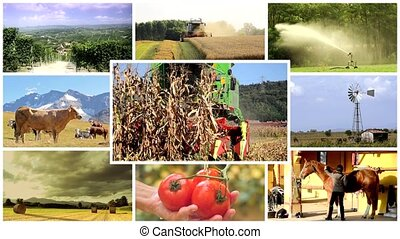 montage, vie pays, agriculture