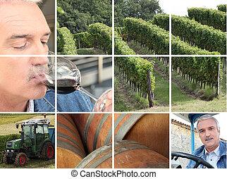 montagem, de, vinho, producao