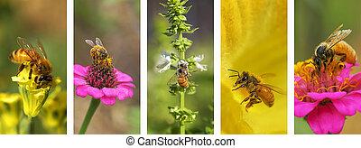montagem, panorâmico, natureza, fundo, abelha